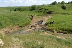 Лошади Каншууей.